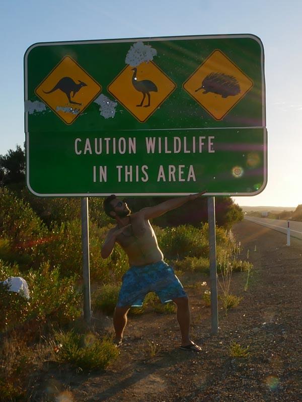 Australien Highway: Wild life Warnschild
